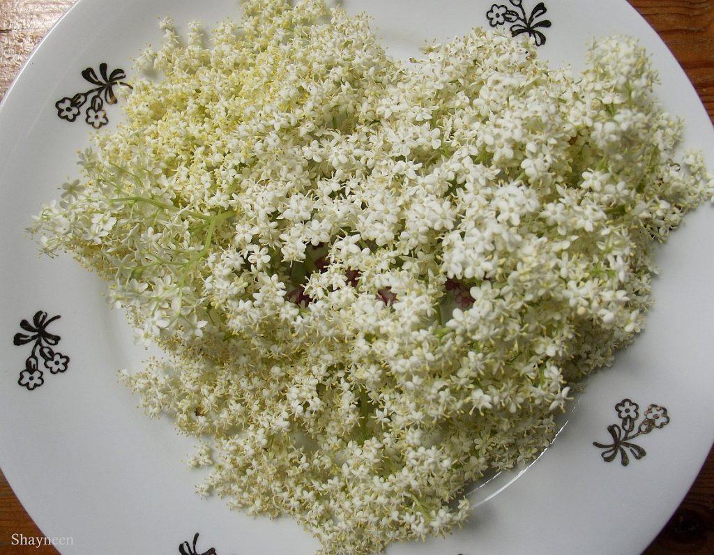 Kwiaty dzikiego bzu