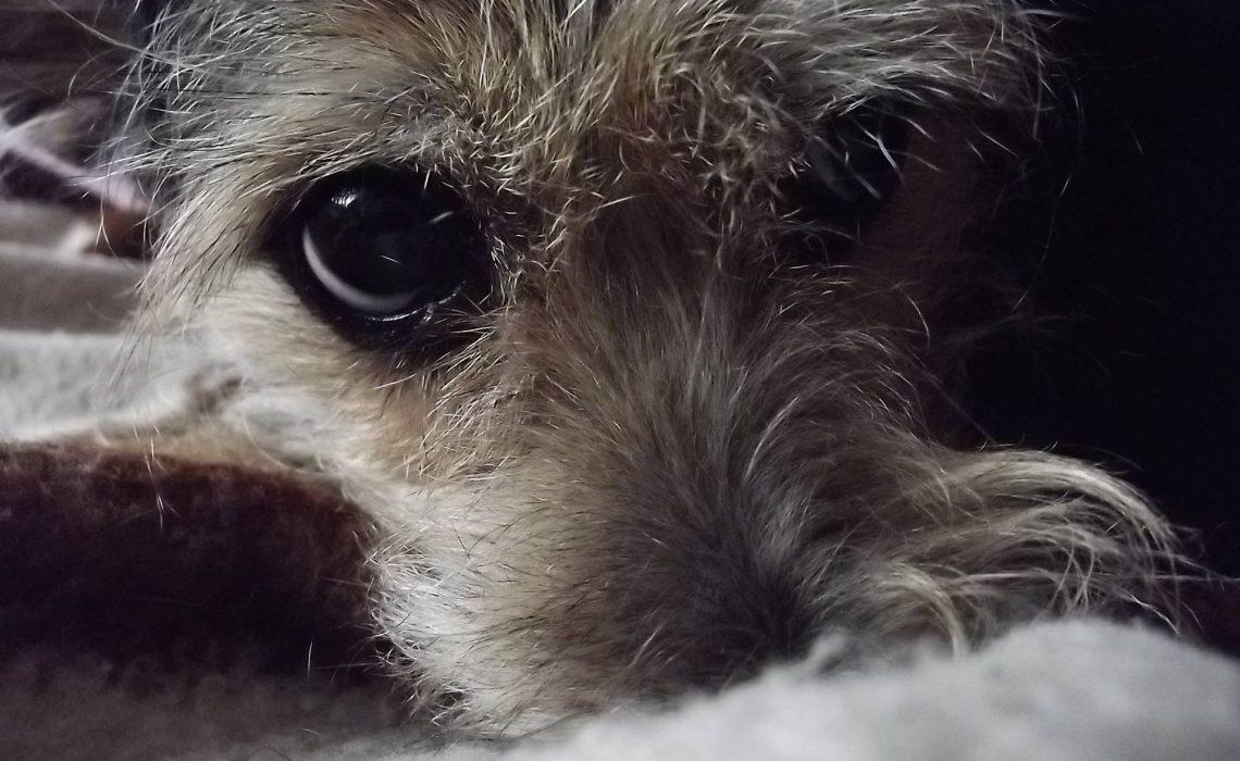 Pies w Sylwestra - jak pomóc